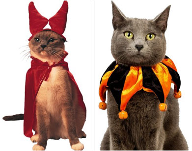 why god why - Halloween Costumes For Kittens Pets