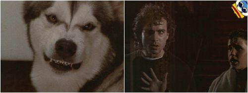 What Is The Name Of Sam S Dog In Lost Boys
